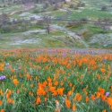 Hills with orange and purple flowers