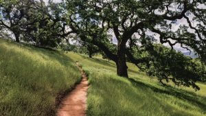 Trail at Millerton Lake.