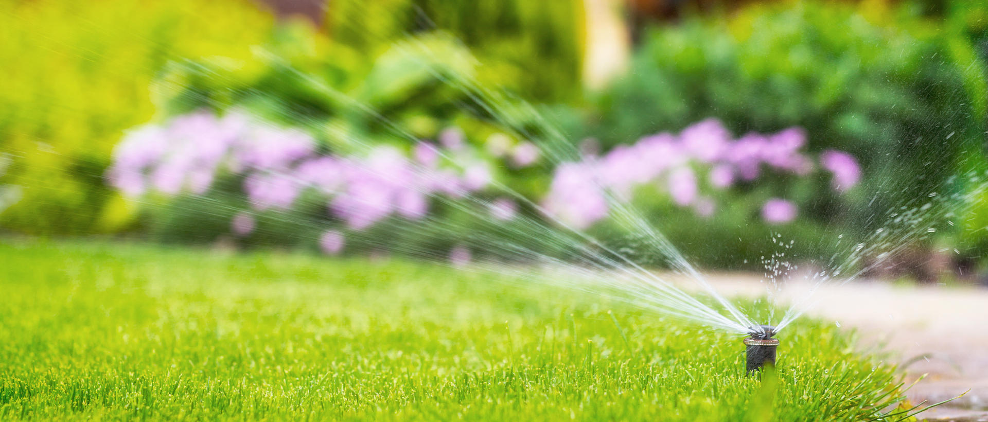 A Sprinkler Watering a Homeowner's Yard