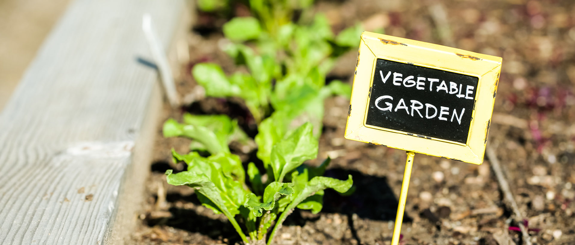 "A small rustic sign reading ""Vegetable Garden"" next to a row of planted vegetables in a garden."