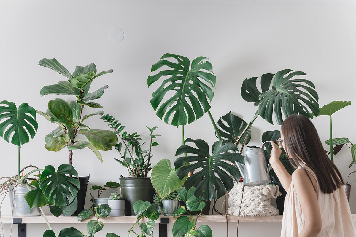 Woman watering a row of various houseplants.