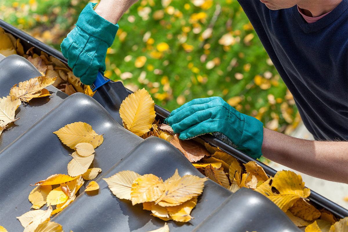 A man cleaning fall leaves from his home's gutters.
