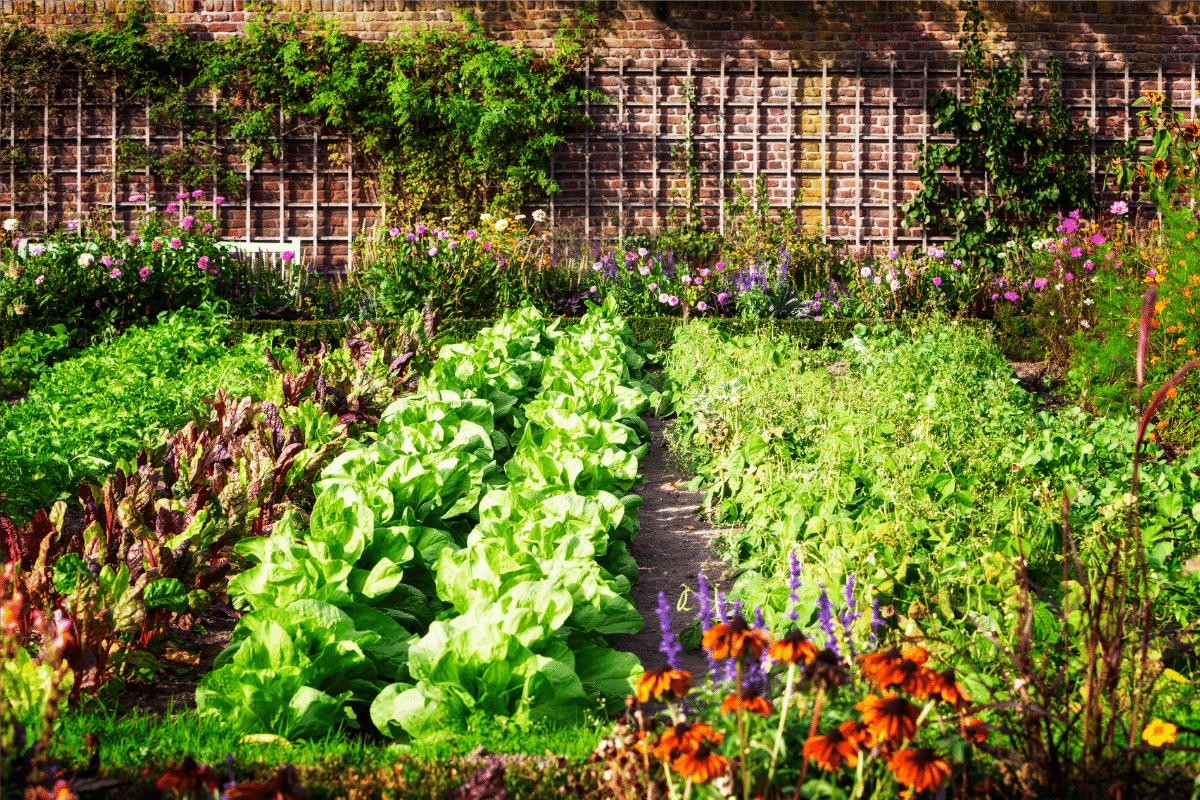 Beautiful Garden with vegetables and flowers